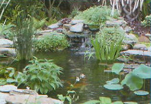 Small pond built with EasyPro Small Pond Kit
